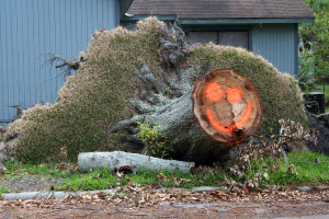 Downed tree image